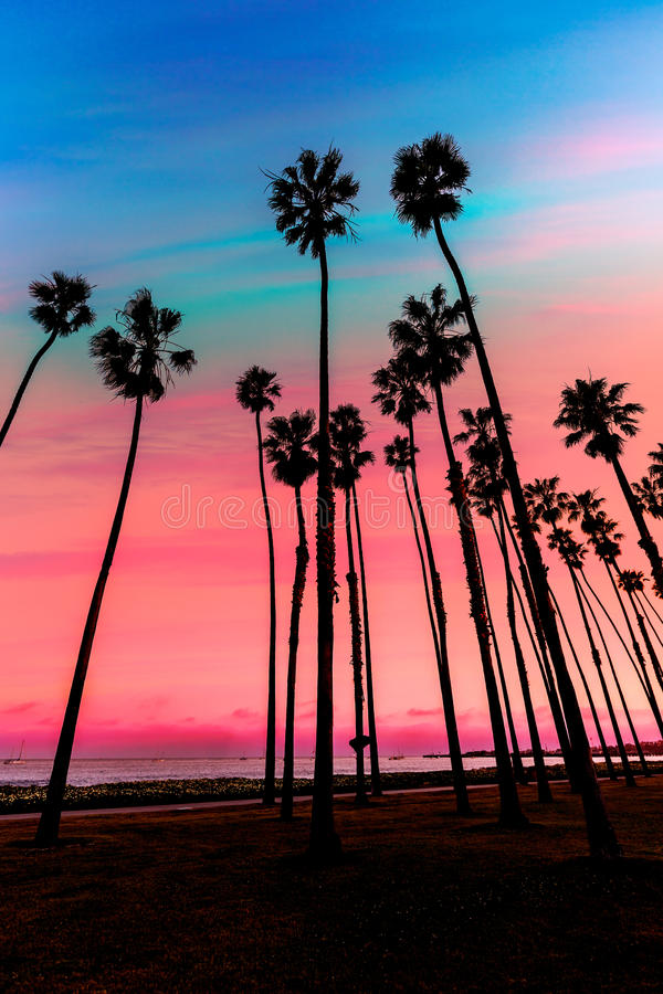 Fileiras da palmeira do por do sol de Califórnia em Santa Barbara imagens de stock royalty free