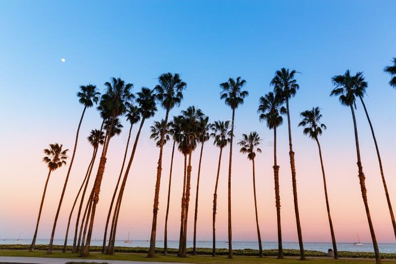 Fileiras da palmeira do por do sol de Califórnia em Santa Barbara fotos de stock