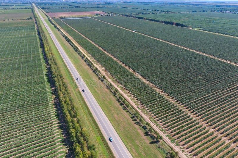 Fileiras das árvores no jardim Aerophotographing, vista superior imagens de stock