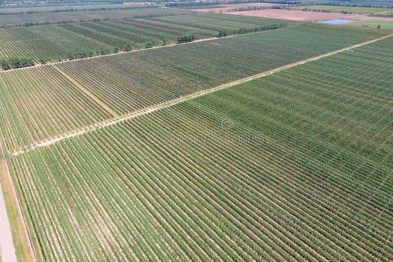 Fileiras das árvores no jardim Aerophotographing, vista superior fotografia de stock
