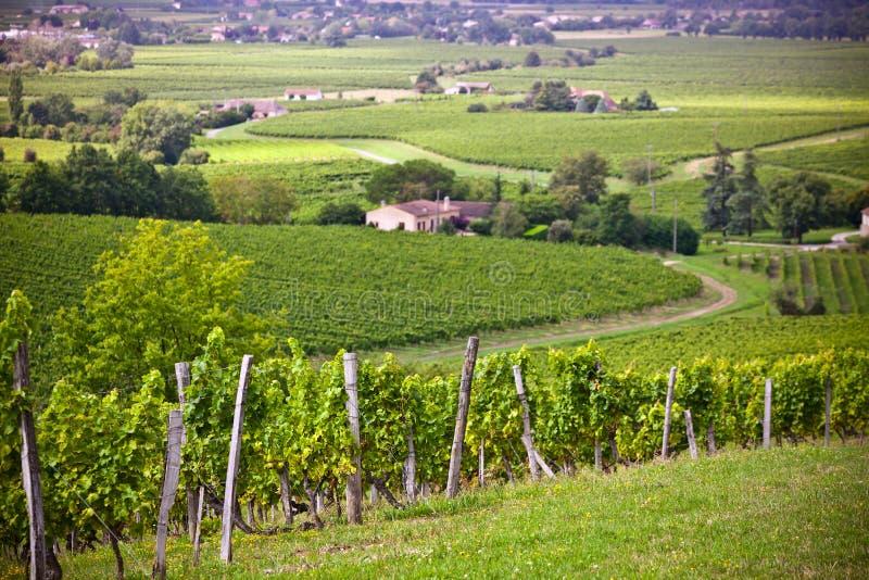 Fileiras de campos do vinhedo em França do sul foto de stock