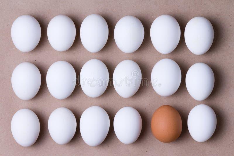 Fileiras de ovos brancos frescos com um marrom um imagens de stock