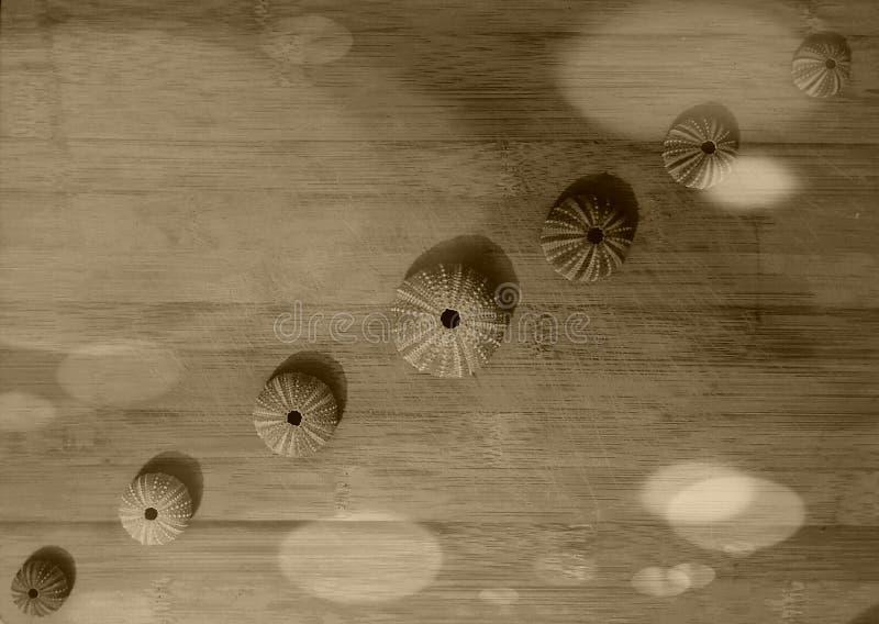 Fileiras de shell do mar imagens de stock