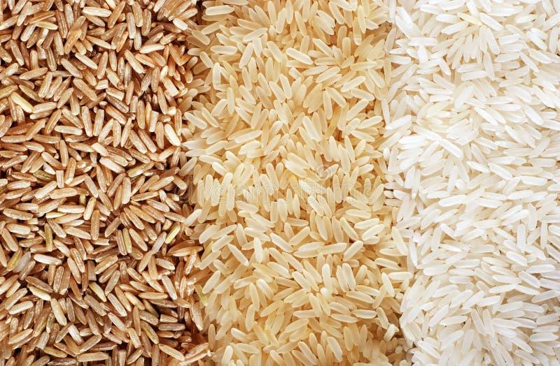 fileiras do arroz marrom, selvagem e branco imagem de stock royalty free
