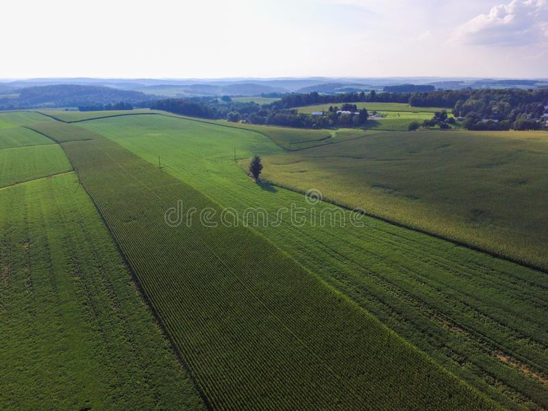 Fileiras do milho na terra em uma cidade do sul Shrewsbu do Condado de York foto de stock royalty free