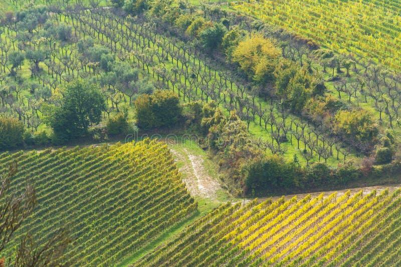 Fileiras dos vinhedos em Toscânia imagens de stock
