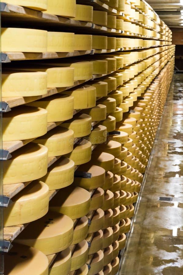 Fileiras longas de amadurecer as rodas do queijo imagens de stock royalty free