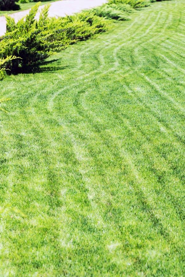 Fileiras recentemente segadas do gramado verde na residência do país com summerhouse Conversão de cedros frescos Projeto da paisa imagem de stock royalty free