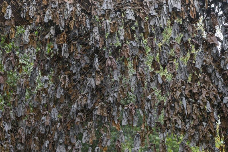 Filet de camouflage images libres de droits
