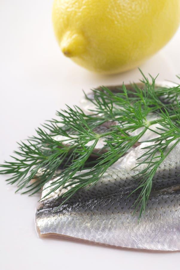 Filet de harengs baltique images stock