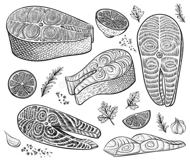 Filet de poissons, bifteck et morceaux crus avec les herbes et le citron Croquis tiré par la main de vecteur de fruits de mer illustration libre de droits