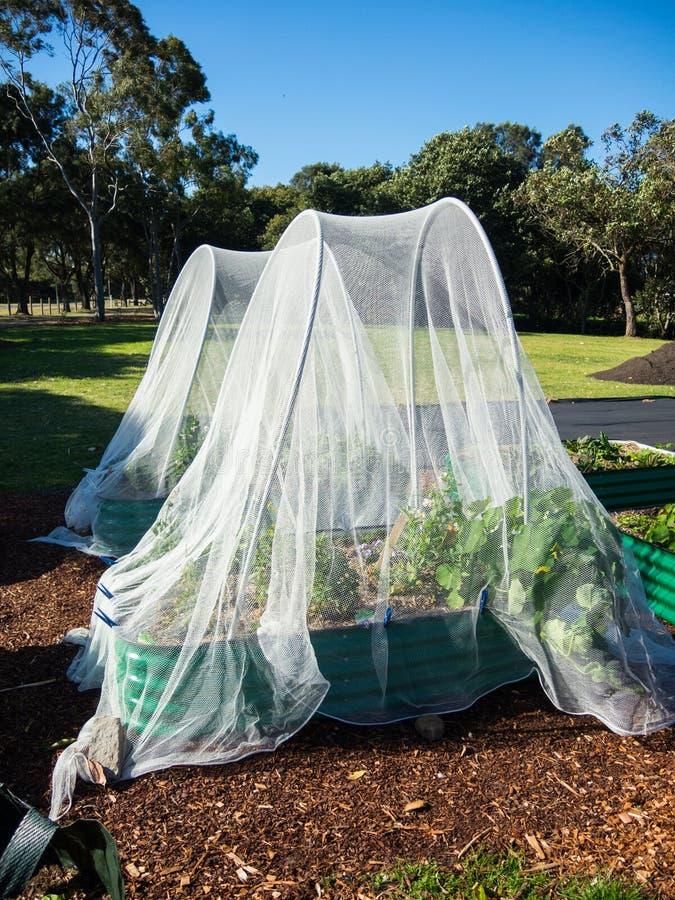 Filetarbeitsinsekt für organischen Gemüsegarten stockbilder