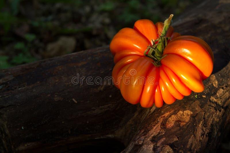 Filete-tipo del tomate de la herencia imagenes de archivo