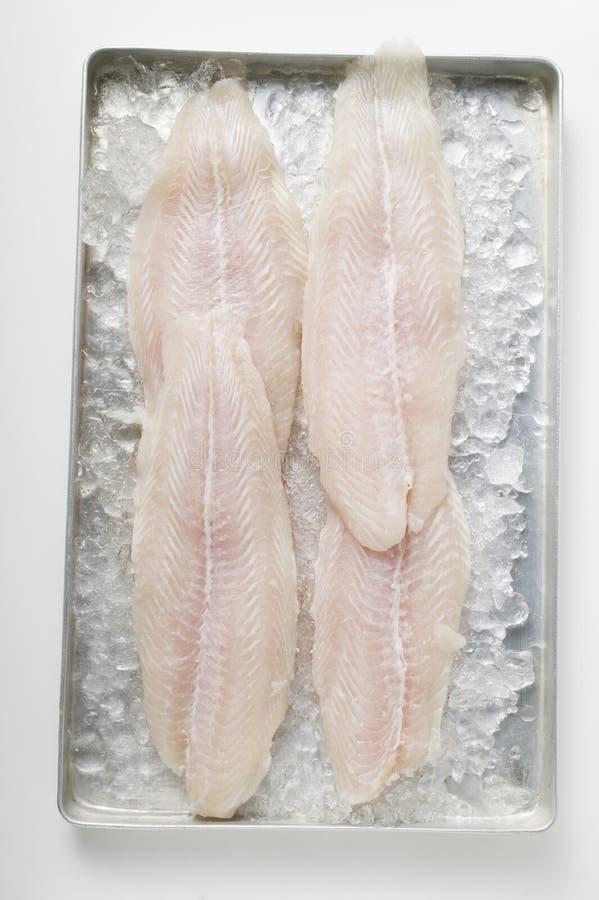 Filetes de pescados fotografía de archivo