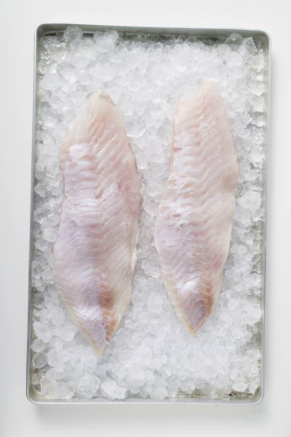 Filetes de pescados en el hielo fotografía de archivo libre de regalías