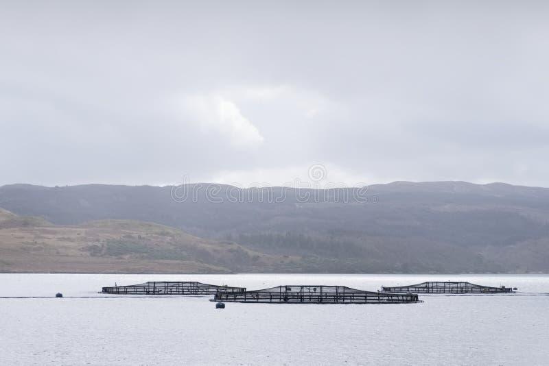 Filets d'exploitation de pisciculture à la côte pour les saumons et la truite dans Argyll Ecosse photographie stock