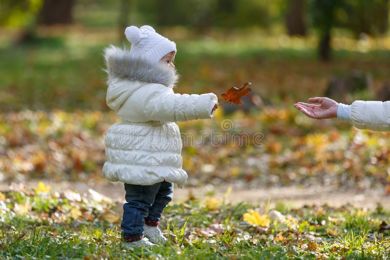 A filha pequena em um revestimento branco dá a sua mãe uma folha de bordo alaranjada do outono no parque fotos de stock