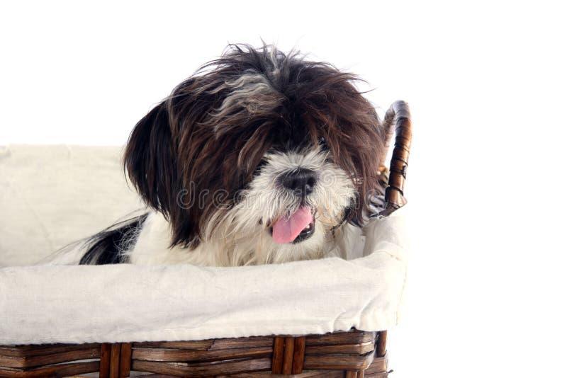 Filhote de cachorro 2 da cesta imagem de stock royalty free