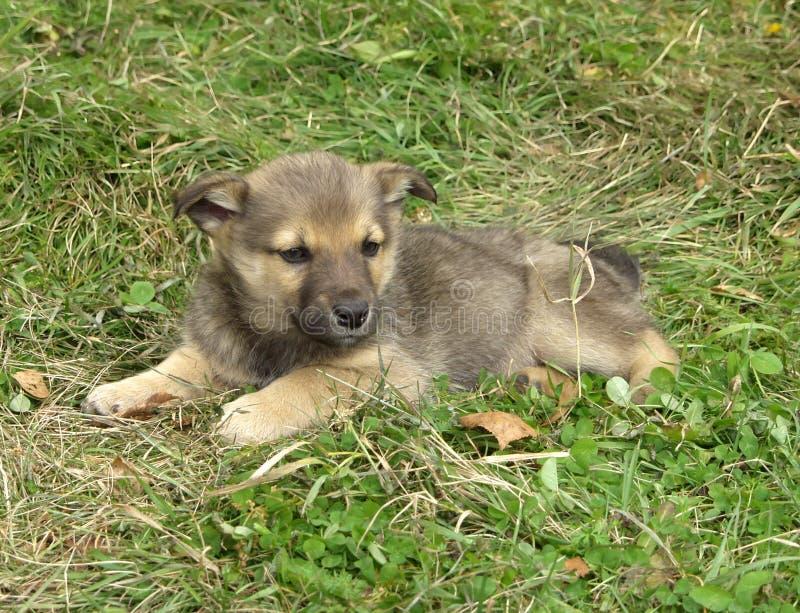 Filhote de cachorro fotos de stock royalty free