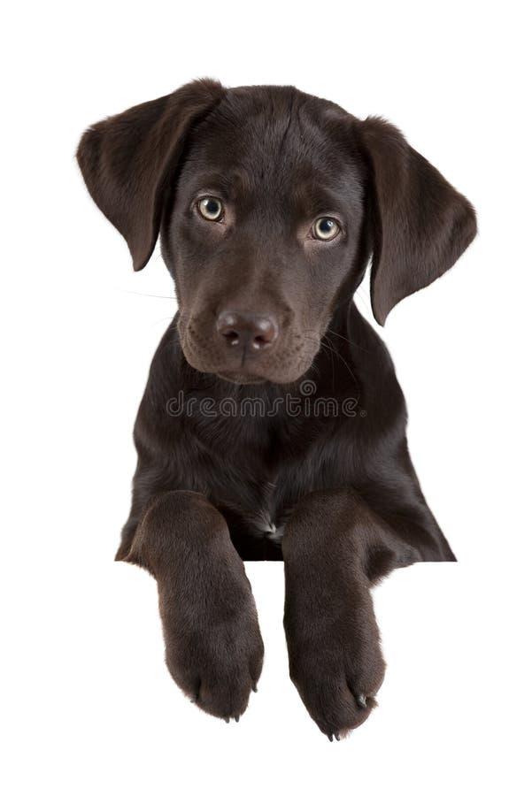 Filhote de cachorro acima da bandeira imagem de stock royalty free