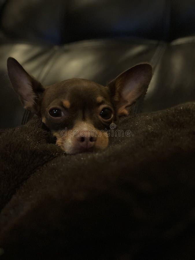 Filhote de cachorro adorável foto de stock royalty free