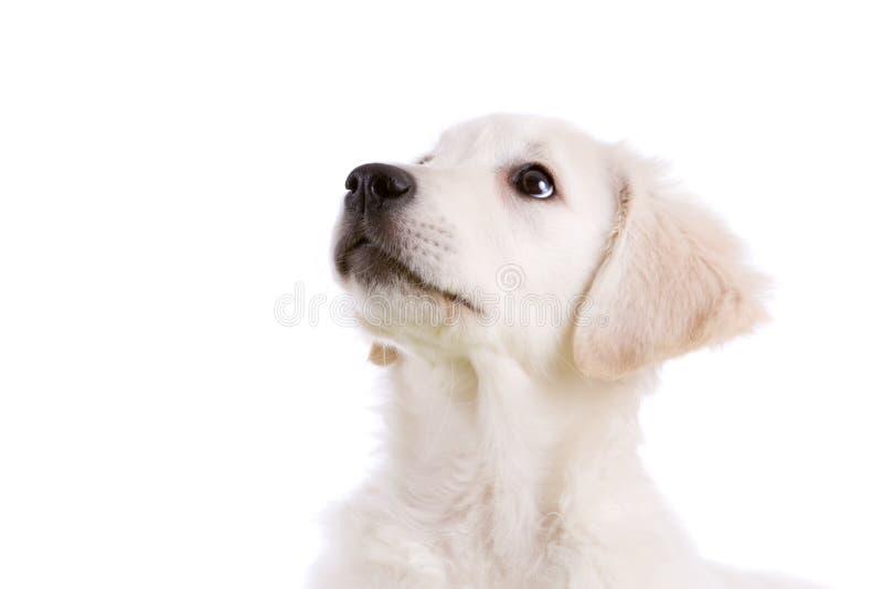 Filhote de cachorro adorável fotografia de stock
