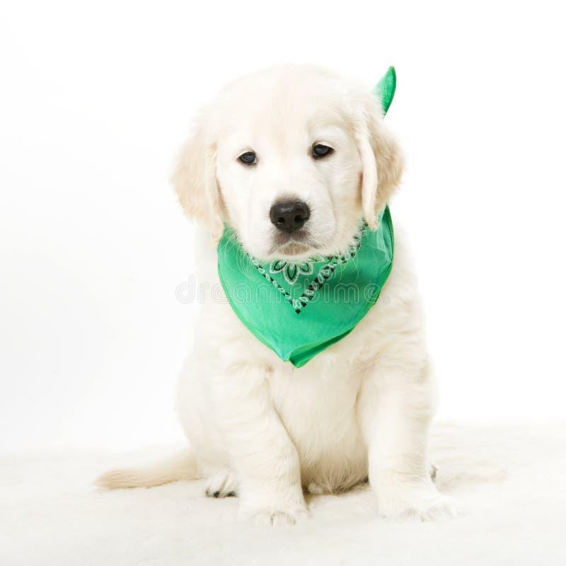 Filhote de cachorro adorável imagens de stock