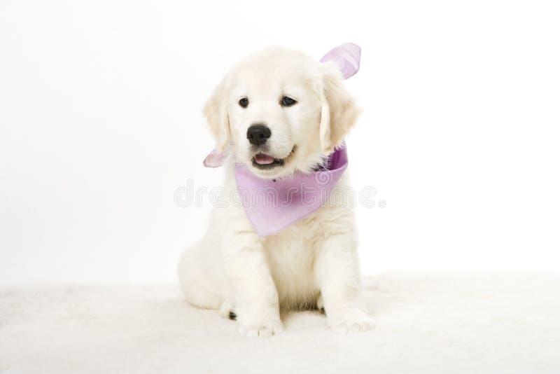 Filhote de cachorro adorável foto de stock