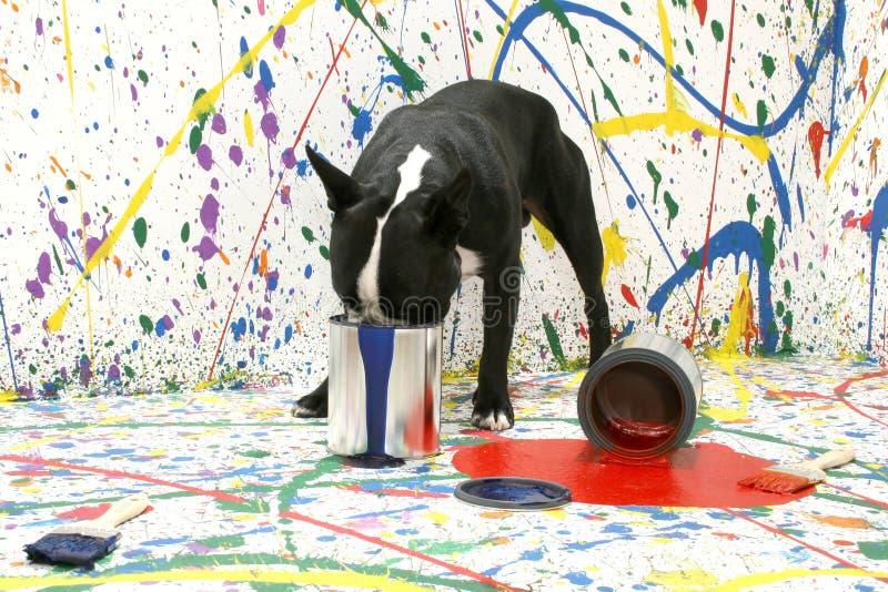 Filhote de cachorro artístico fotografia de stock royalty free