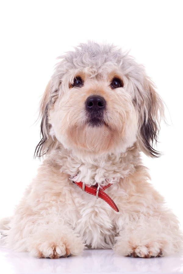 Download Filhote De Cachorro Assentado Imagem de Stock - Imagem de brilhantemente, mamífero: 16865717