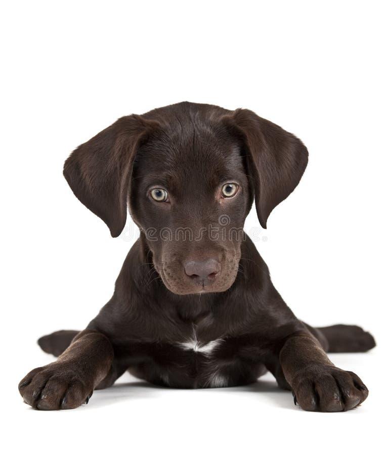 Filhote de cachorro bonito fotografia de stock royalty free