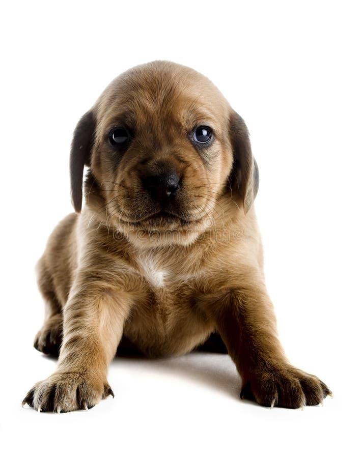 Filhote de cachorro bonito