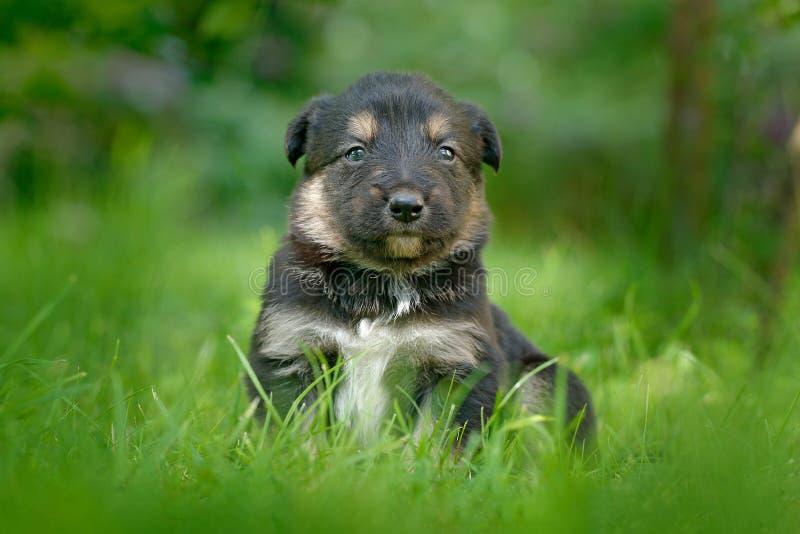 Filhote de cachorro bonito do cão que senta-se na grama verde Animal no jardim Cão novo infeliz do filhote sem mãe Filhote pequen imagens de stock royalty free