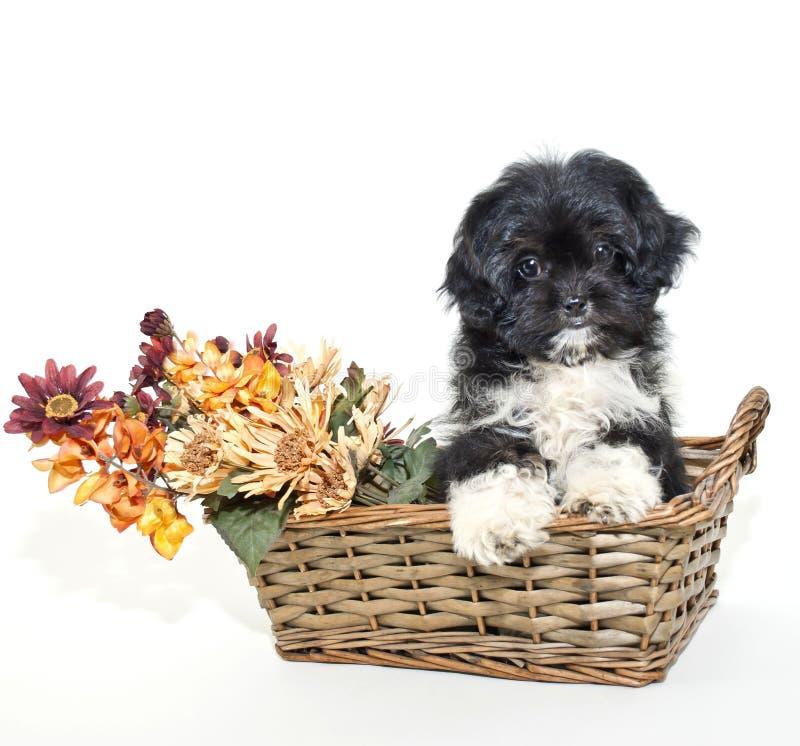Filhote de cachorro com as flores coloridas queda. imagens de stock