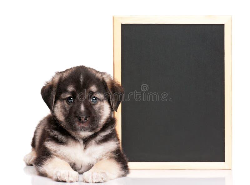Filhote de cachorro com quadro-negro imagens de stock
