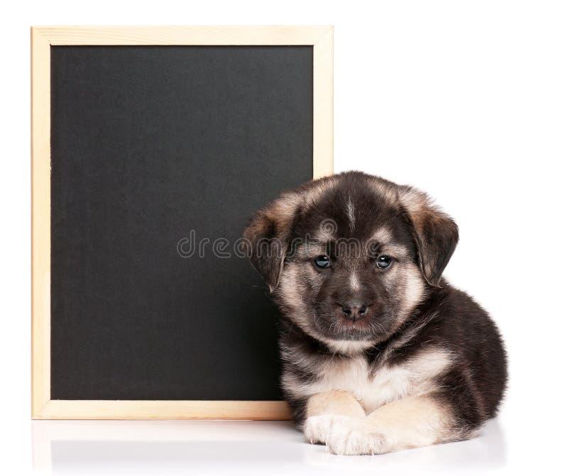 Filhote de cachorro com quadro-negro fotografia de stock
