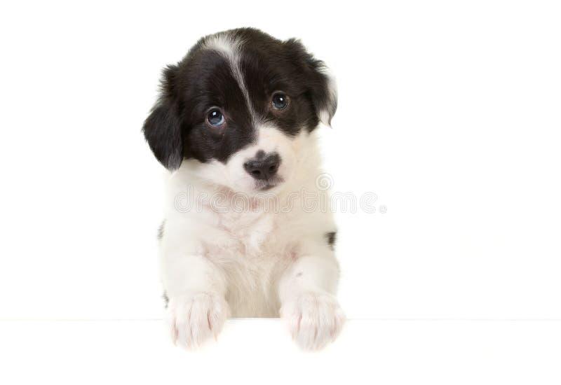 Filhote de cachorro com um cartão da mensagem foto de stock