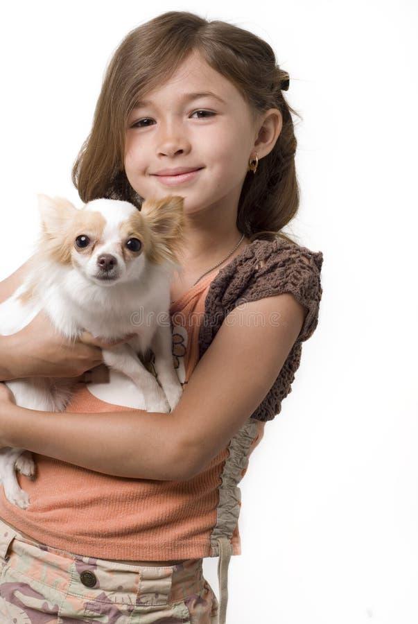 Filhote de cachorro da chihuahua da terra arrendada da menina de Ittle imagens de stock