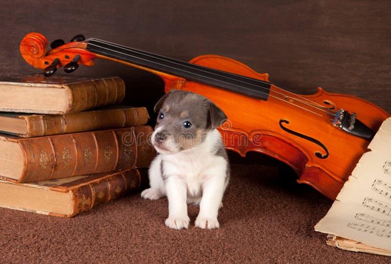 Filhote de cachorro da música foto de stock royalty free