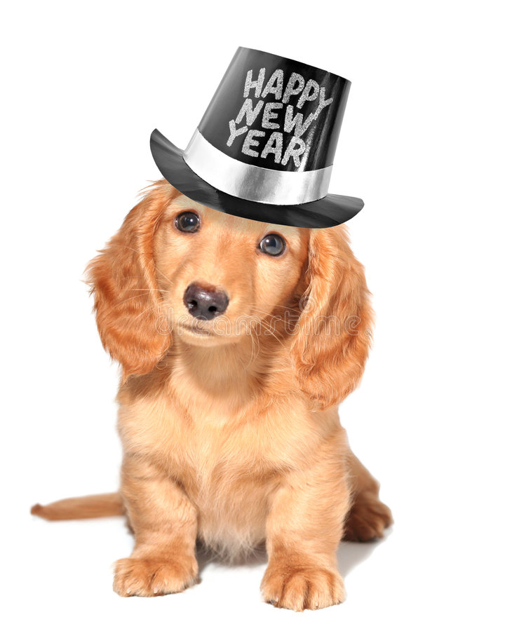 Filhote de cachorro da véspera de Ano Novo. imagem de stock royalty free