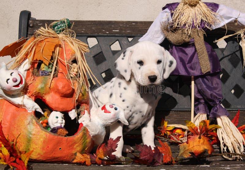 Filhote de cachorro Dalmatian na decoração de Halloween fotografia de stock royalty free
