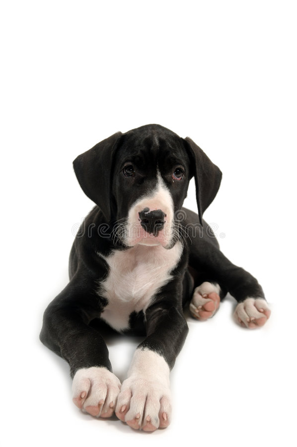 Filhote de cachorro de descanso fotografia de stock