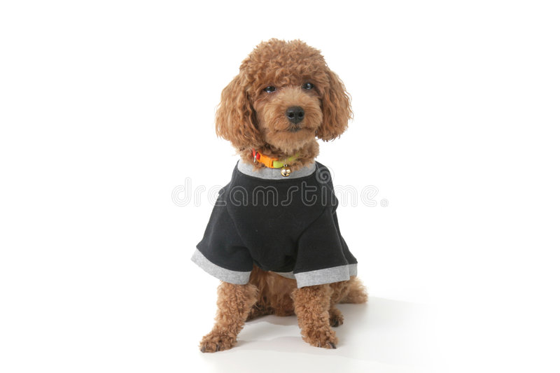 Filhote de cachorro de grito fotos de stock royalty free