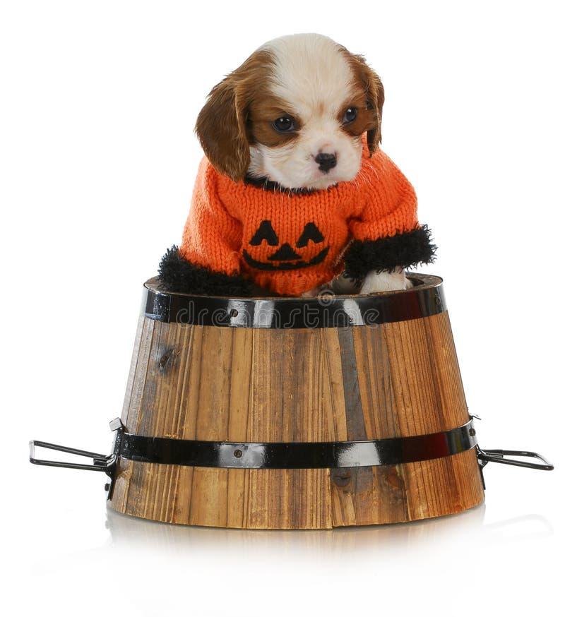 Filhote de cachorro de Halloween foto de stock
