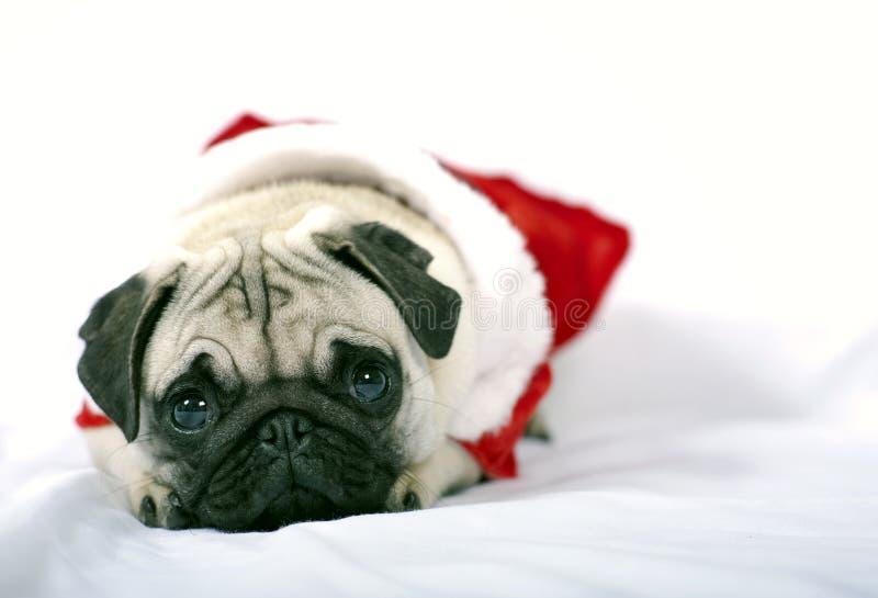Filhote de cachorro de Papai Noel fotografia de stock royalty free