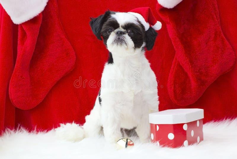 Filhote de cachorro de Santa. imagens de stock royalty free