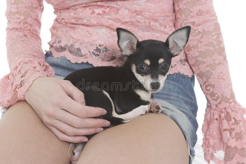 Download Filhote De Cachorro Do Bolso Foto de Stock - Imagem de fêmea, jeans: 67860
