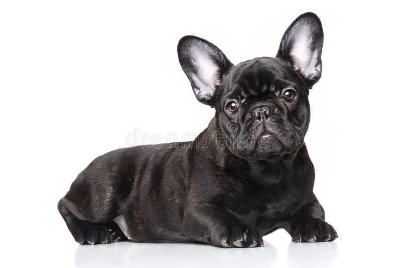 Filhote de cachorro do buldogue francês fotografia de stock