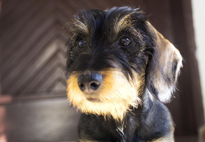 Filhote de cachorro do cão imagens de stock