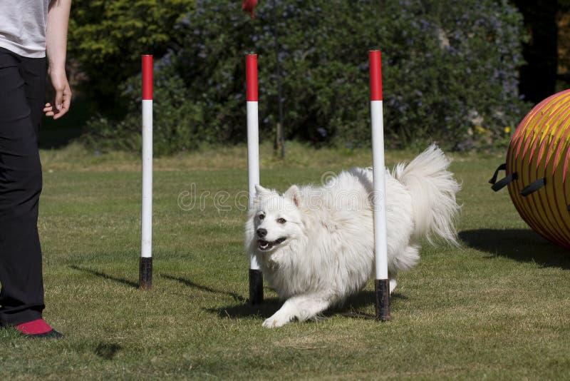 Filhote de cachorro do cão em pólos do weave fotos de stock royalty free